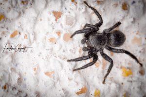 Spider, Dijon par Frédéric Coignot
