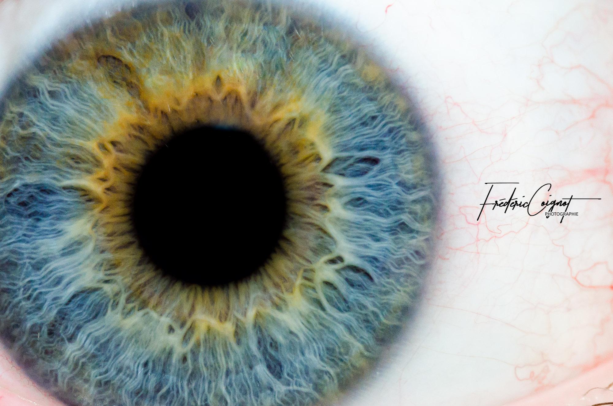 My eye par Frédéric Coignot